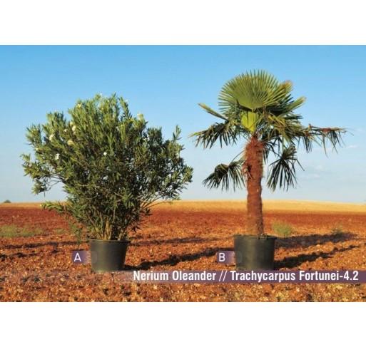 Neríum oleander
