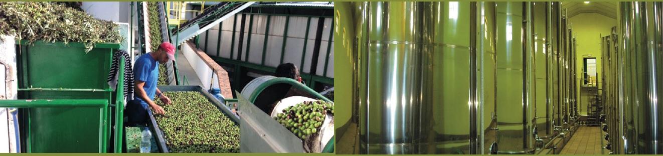 aceite de oliva soler romero
